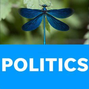 libélulas
